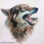 Wolf smile by LauraMSS