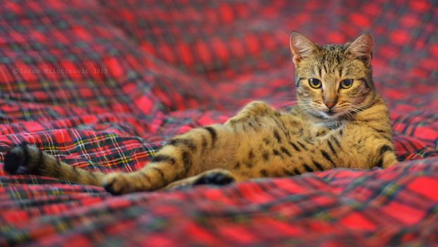 Draw me like one of your french girls by ZoranPhoto