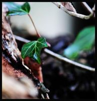 greens by FMpicturs