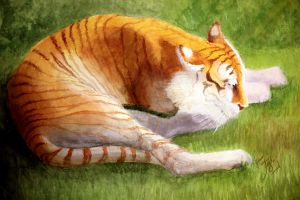 Golden Tabby Tiger by illustratorJI