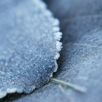 frosty december by Megson