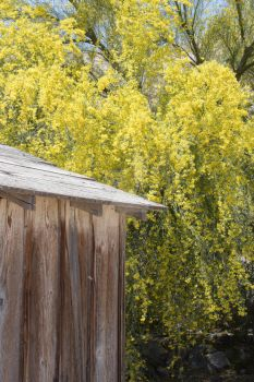 Yellow Spring Flowers - DeathValley 2017 by Sunseeker-Photos