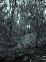 Opethic Silver Forest by Koprone