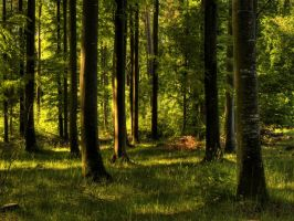 Enchanted forest Wallpaper by JoInnovate