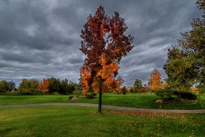 On the Golf Course by zootnik