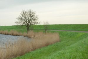 Behind the dike by steppelandstock