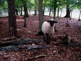 forest sheep by Mortifiera