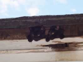 Kittens in a gutter by writergal1