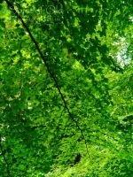 A thousand shades of green. by SpiritOfOld