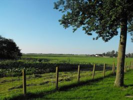 a view to Kolhorn(The Netherlands) summer 2012 by Trea1969