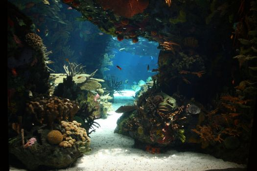 Aquarium Stock 27 by Malleni-Stock