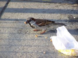 .:Lunch Time for a Sparrow:. by ColorMyMemory