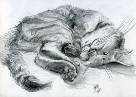 My cat by Jily