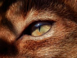 Cat eye by Noanja