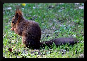Squirrel 4 by Etherick