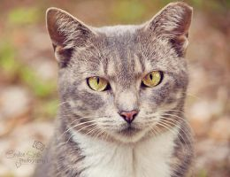 Mama Kitty II by CandiceSmithPhoto