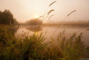 Foggy Pond by Sulde