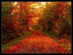 Autumn's beauty by JoInnovate