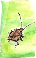 Stink Bugs Stink by angelac