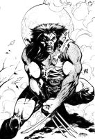 wolverine by wgpencil