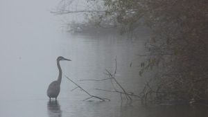 Foggy Morning for a Crane by raverqueenage