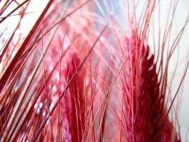 Red Wheat by ehofferle