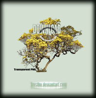 Tree 39 Stock by FrostBo