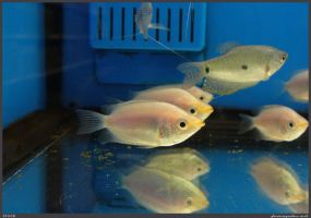 Fish Stock 0068 by phantompanther-stock