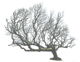 Leaning Tree PNG.. by WelshDragonStockNArt