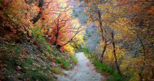 Wandering into Autumn by DaisyDinkle
