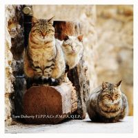 Navelli Cats by PicTd