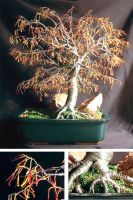 Autumn Bonsai - Wire Tree by SalVillano