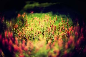 Flowers and grass by sunny2011bj