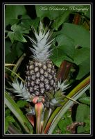 Pinapple 2 by DesignKReations