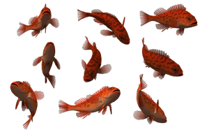 Fish Set 24 by Free-Stock-By-Wayne