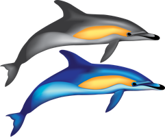 Vector Common Dolphins by hollywood714