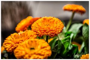 Just flowers by etsap