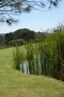 Dam Reeds Stock by Storms-Stock