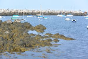 Ocean Cove, Boats and Seaweed by Miss-Tbones