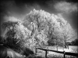 Ice Trees b+w... by MichiLauke