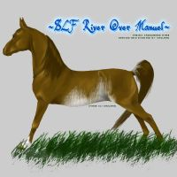 VHR- Sabino Saddlebred by Kholran