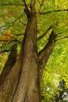Barking up the Right Tree by Gerard1972