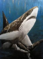 Shark Week 2011- Great White by Ama-Encyclopika