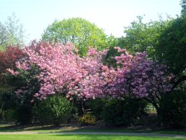 Blossom Tree by Kirsty2010dodgs