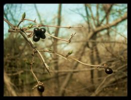 Signs of Life. by Littography