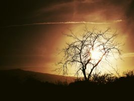 Sunset Tree by Leaves-in-the-wind
