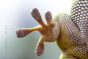 Gecko Foot by dampStamp
