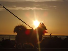 Pancho in the Sunset on Araha by BananaGosip808