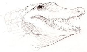 American Alligator by MetalReaper