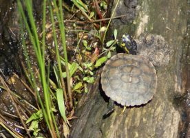 Baby Turtle, Untouched by MLStock